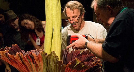 Corpse Flower Blooms at Huntington Library