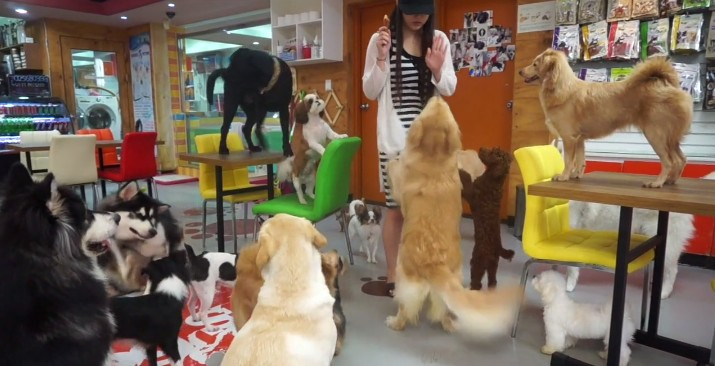 Los Angeles First Dog Cafe