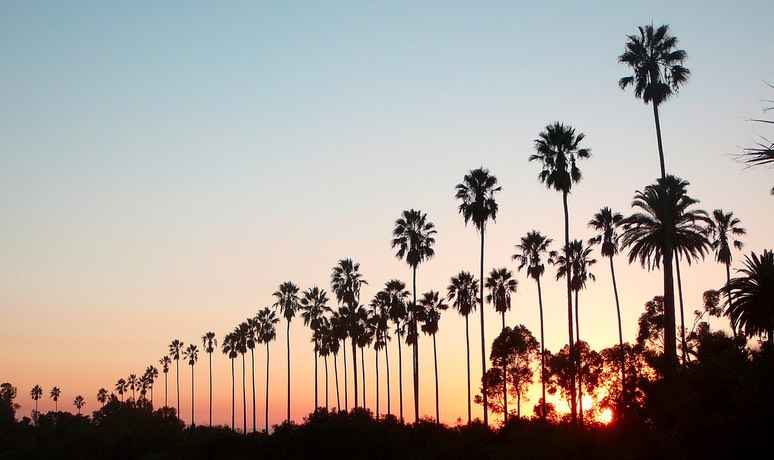 Elysian Park Palm Trees