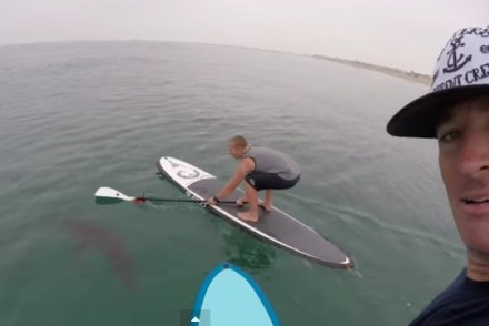 Great White Spotted by Paddle Boarders