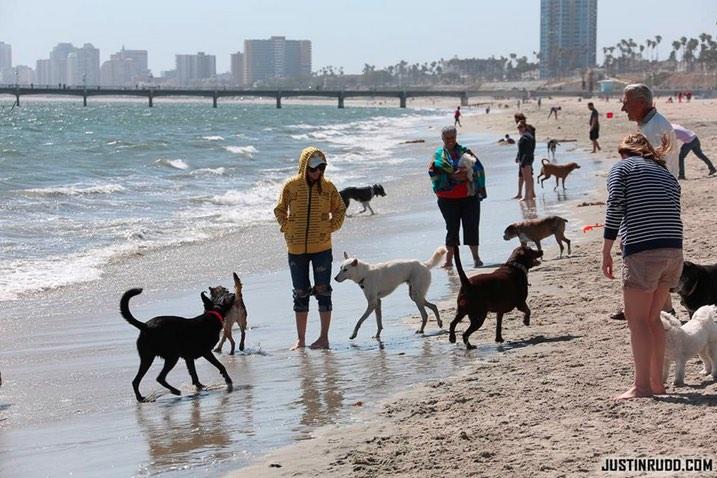 Rosie's Dog Beach