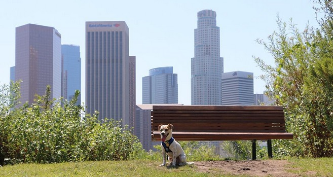 13 things your dog really wants to do with you in los for Dog hotels los angeles