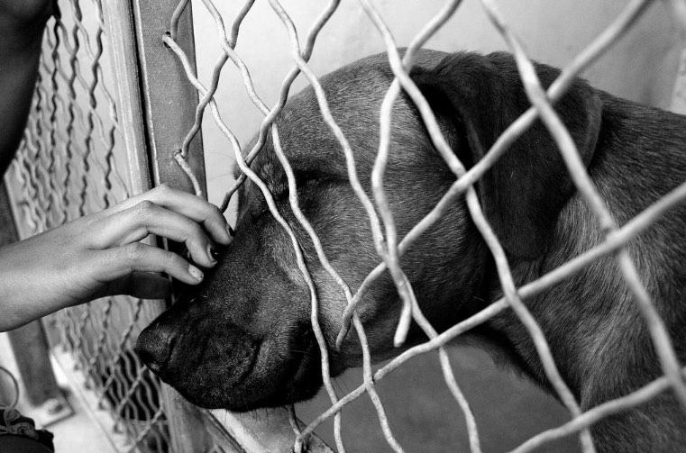 Dog adoption featured