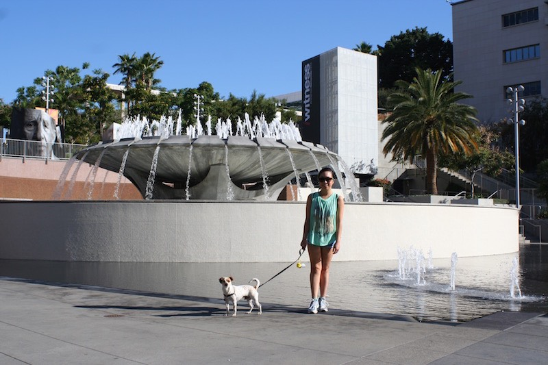 Dog at Grand Park Fountain