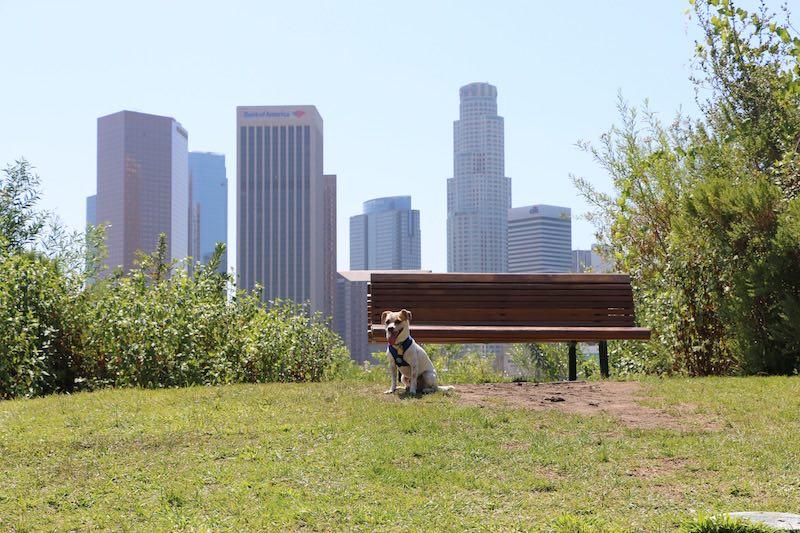 Vista Hermosa Park dog