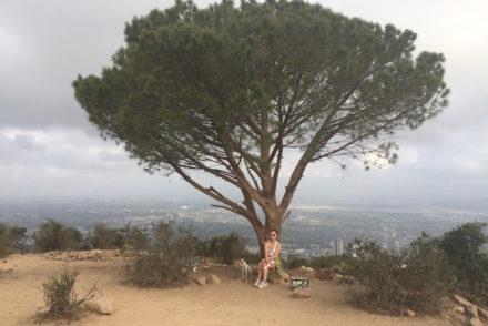 Wisdom Tree dog