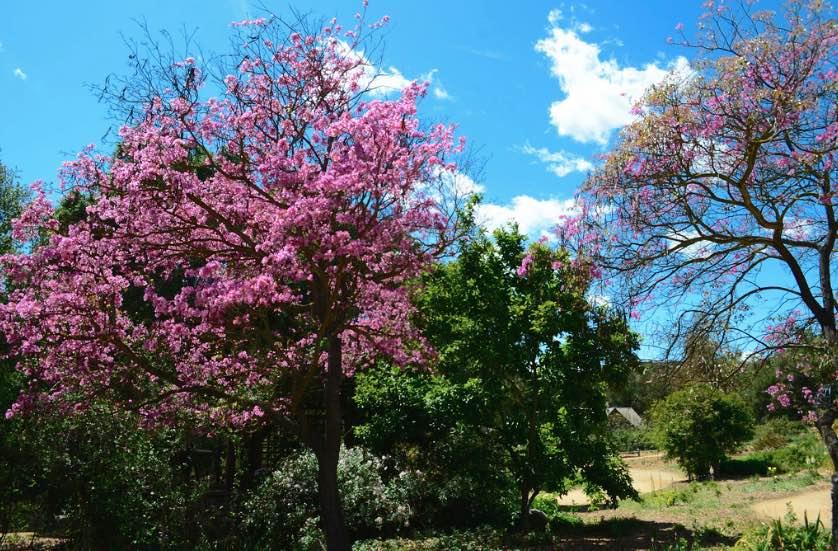 descanso-gardens-blossoms