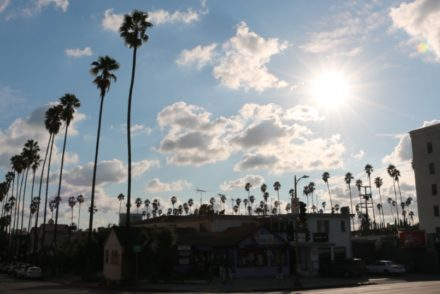 Palm Trees Beverly Blvd