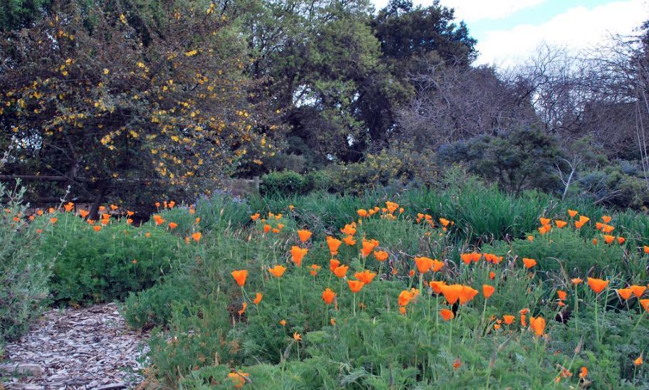 Delicieux Rancho Santa Ana Botanical Gardens