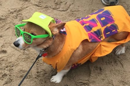 SoCal Corgi Beach Day 2016