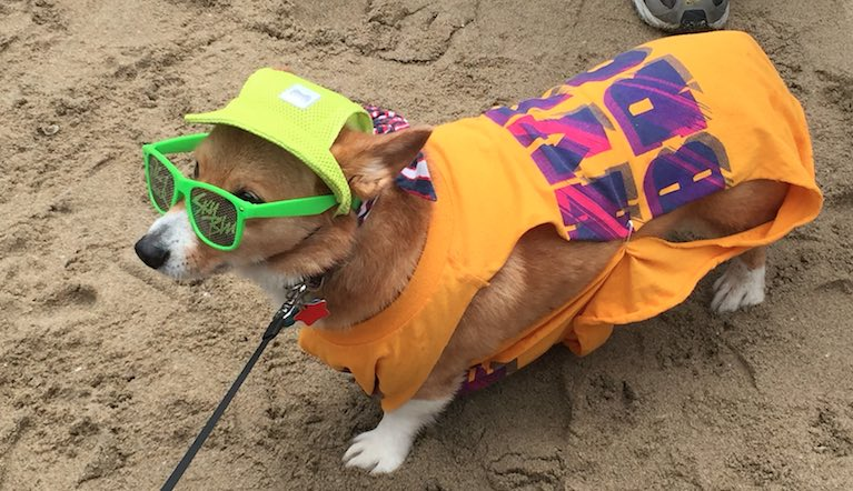 SoCal Corgi Beach Day 2016