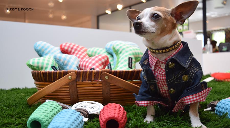 Charity Sample Sale and Dog Adoption Fair at California Market ...