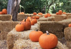 spooky stories at descanso gardens featured