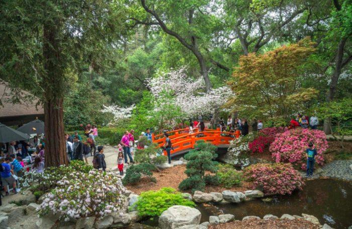 Descanso Gardens Annual Cherry Blossom Festival