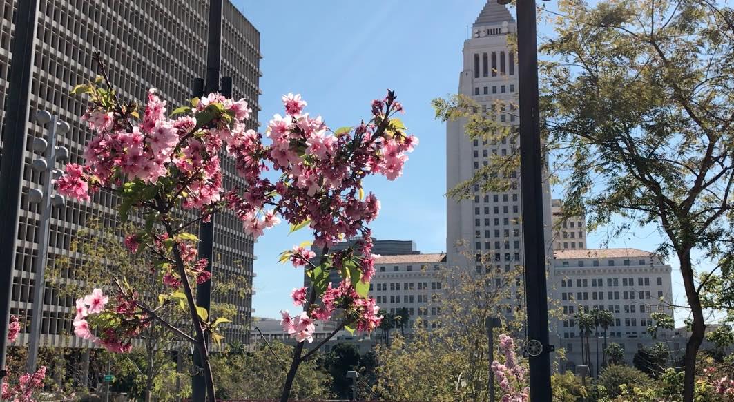 Grand Park Spring Flowers
