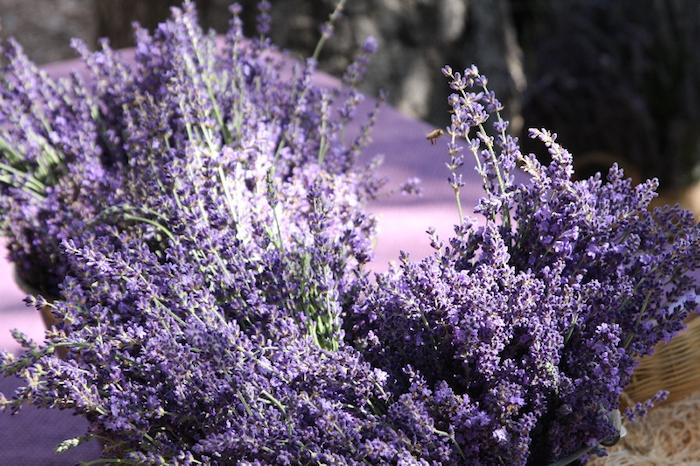ojai lavender festival