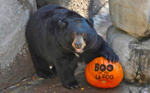 Boo at the LA Zoo 2017