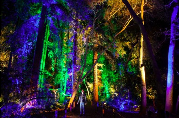 The Enchanted: Forest of Light at Descanso Gardens