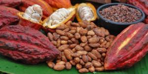 Plactica y Pruebas: The History of Chocolate