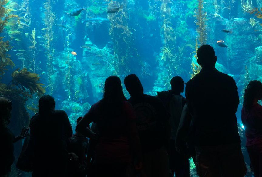 The California Science Center Aquarium. Credit: Brian Champlin.