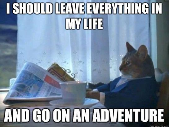 Adventure Realization Cat