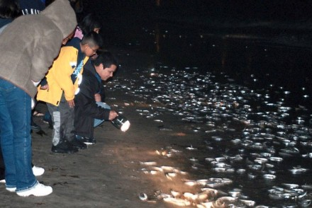 Grunion Run Cabrillo Marine Aquarium