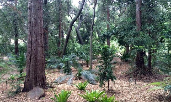 Descanso Gardens Ancient Forest