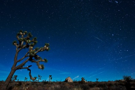 Geminid Meteor above a Joshua Tree