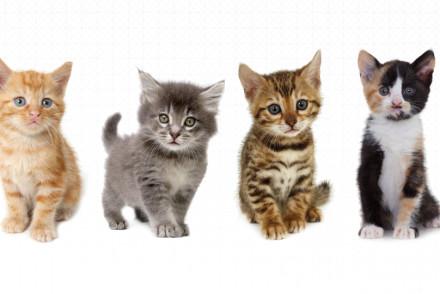 Uber Kittens on Demand