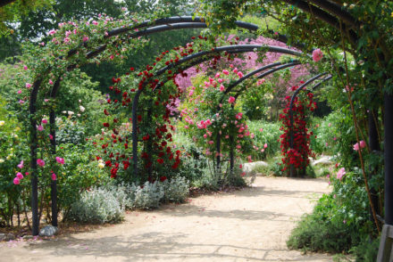 descanso rose garden