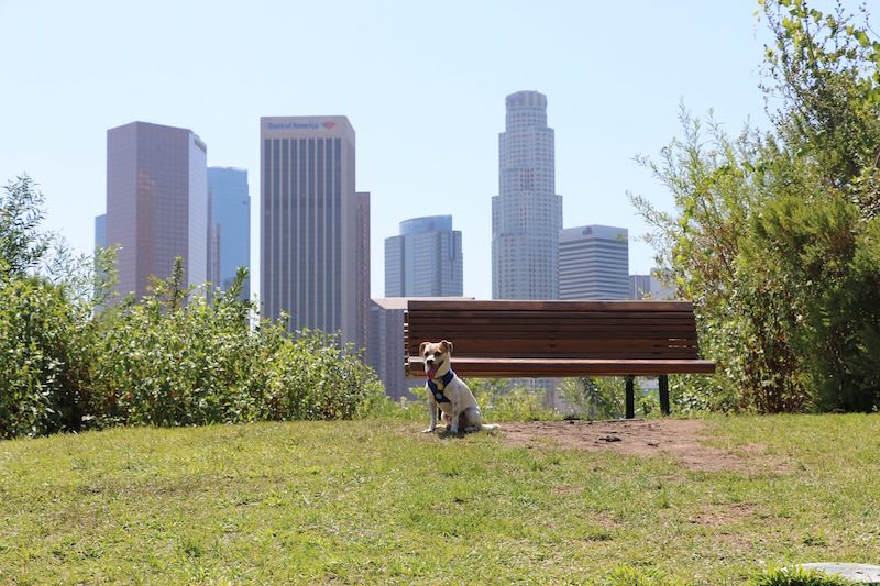 Vista Hermosa Park dog