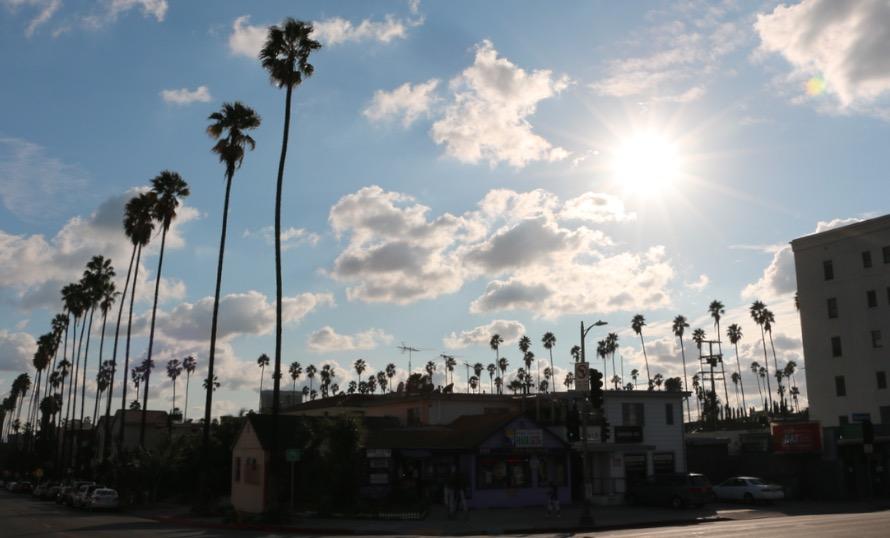 Palm Trees Beverly Blvd