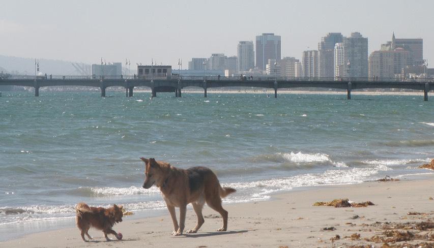Dogs at Rosie's Dog Beach