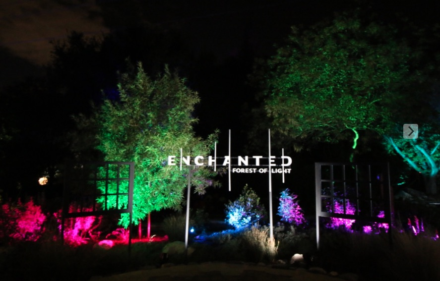 Enchanted Forest of Light Sign