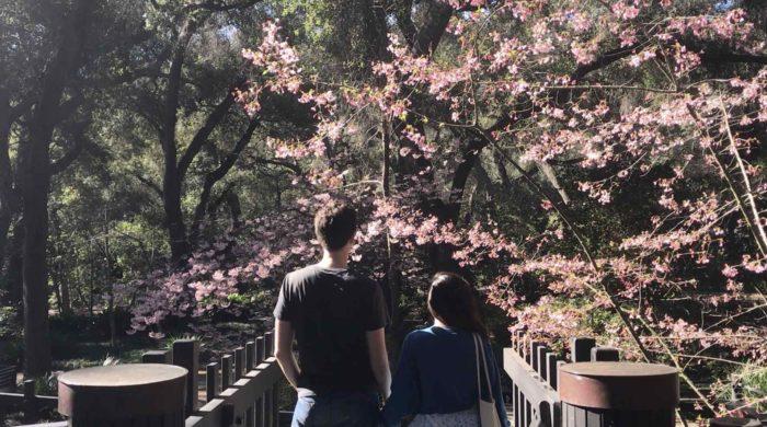 Descanso Gardens Japanese Garden