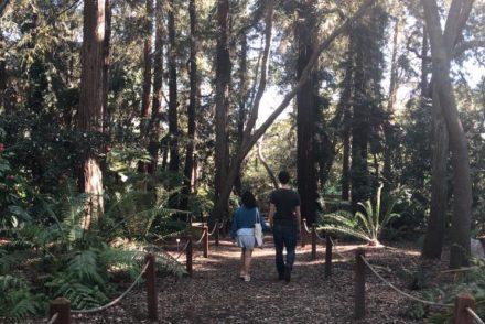 Walk through Descanso Gardens