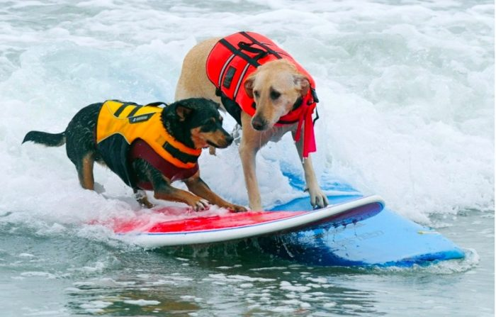 Surf City Surf Dog Competition 2017
