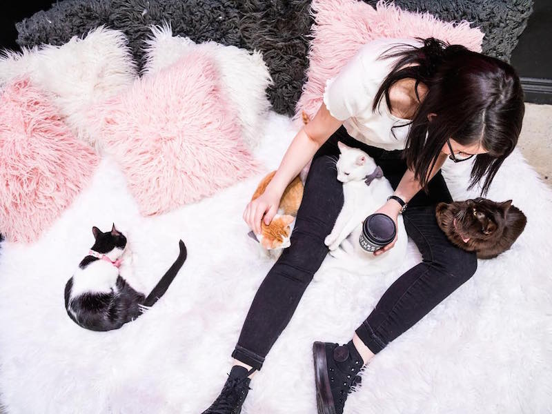 A Tale Of Two La Cat Cafes
