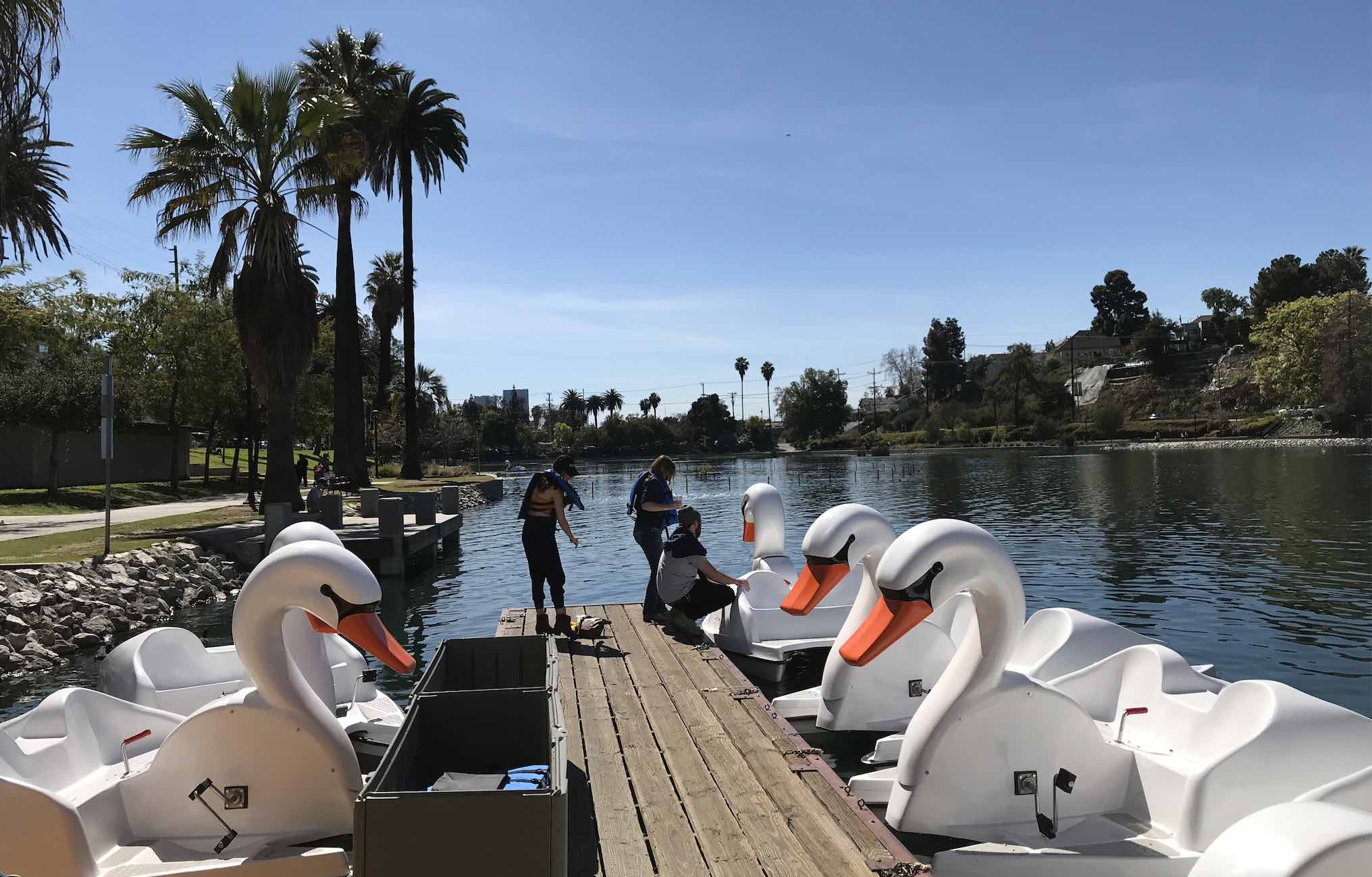 You Can Now Ride Swan Boats At Echo Park Lake