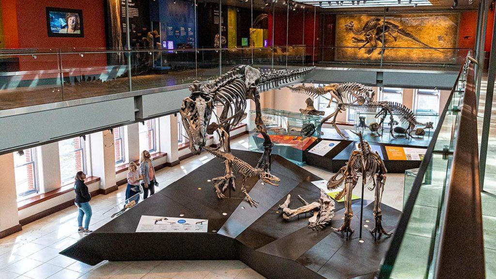 natural-history-museum-dinosaur